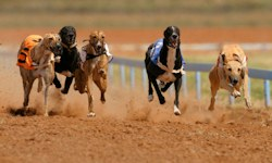 Galway Greyhound Racing