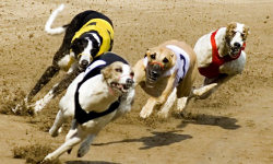 Greyhound Racing Dublin