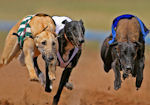 Cork Greyhound Racing