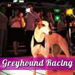 Greyhound Racing Limerick